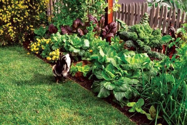 Edible Landscaping Grow 700 Of Food In 100 Square Feet Mother Earth News Earth Edible Feet Food Grow In 2020 Edible Landscaping Backyard Farming Dream Garden