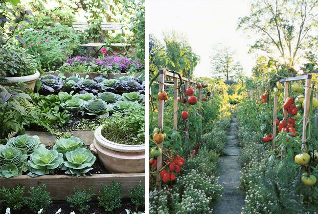 Vegetable garden by pool vegetable garden dicorcia for Pretty vegetable garden designs