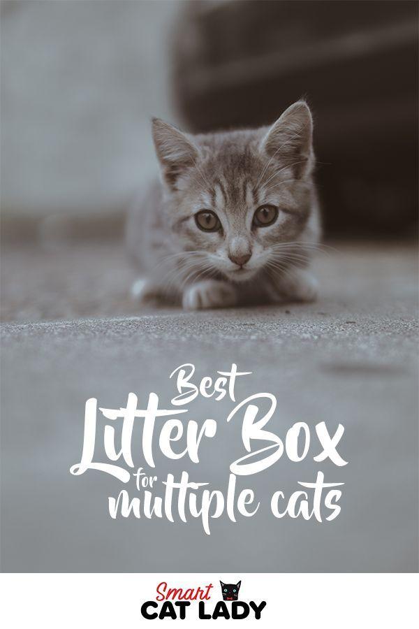 Best Litter Box For Multiple Cats Cat Care Best Cat Litter