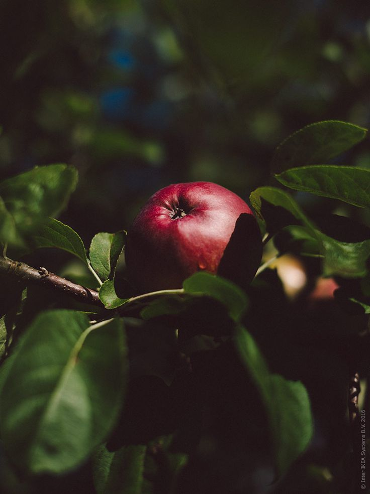 ikea_appelgalette_inspiration_1