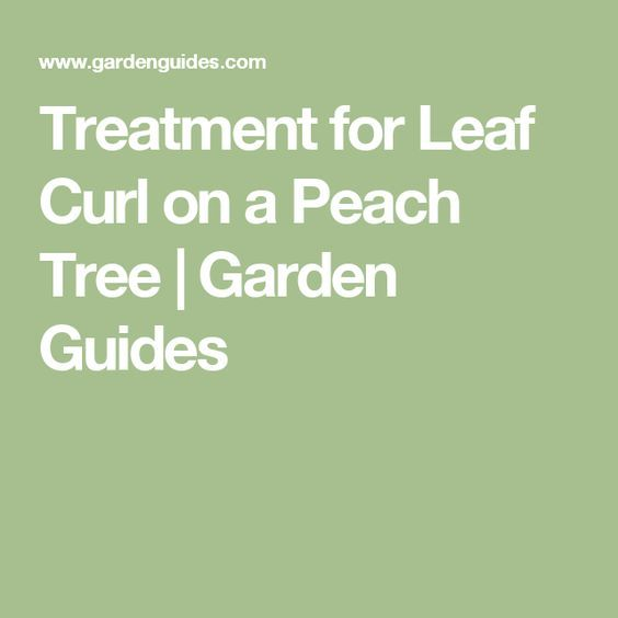 Treatment for Leaf Curl on a Peach Tree | Garden Guides