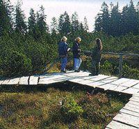 Tříjezerní slať - - Naučné stezky v NP - Národní park Šumava
