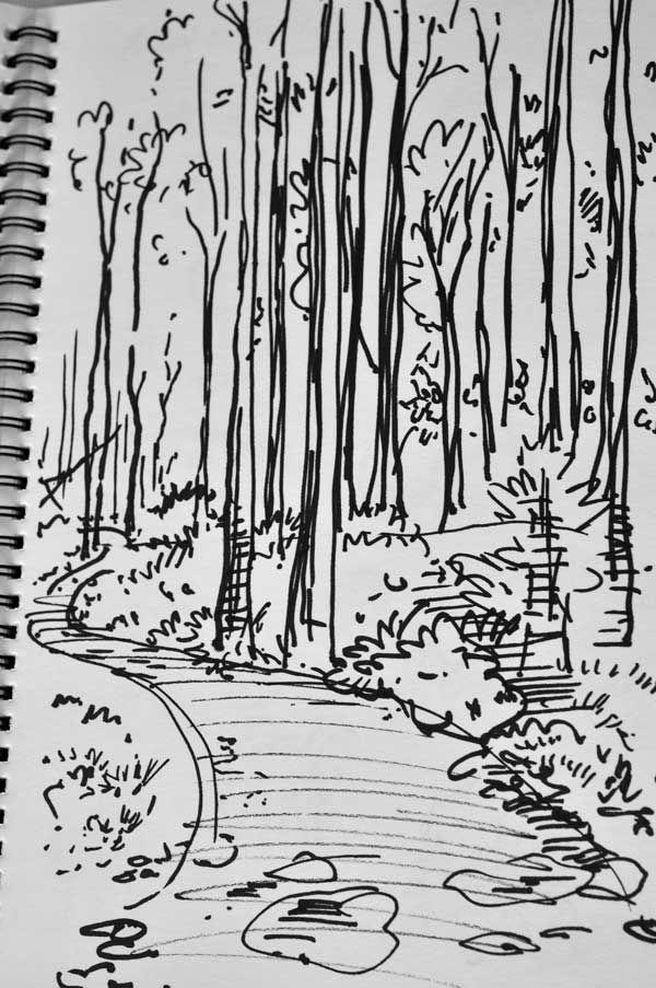 tall trees - marker pen sketch