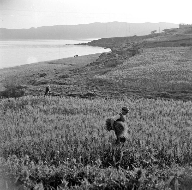 Κάρυστος, 1950-55. Φωτογραφία της Βούλας Παπαιωάννου.