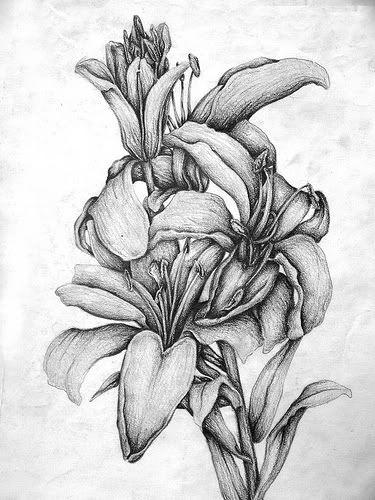Ms de 25 ideas increbles sobre Flores a lapiz en Pinterest