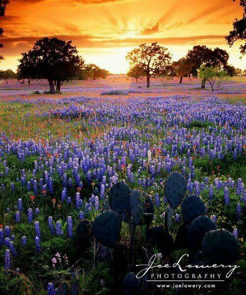 Sunset at Texas Hill Country! Bluebonnets!