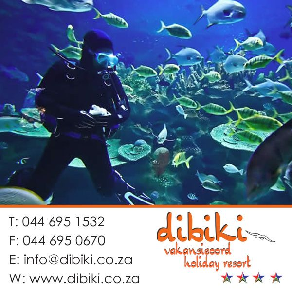 There are a lot of things to do in and around Mossel Bay and Dibiki Holiday Resort. Diving in the Indian Ocean. Discover the Indian Ocean and go diving at the coast by Mossel Bay. You will find plenty of opportunities to dive around Mossel Bay and the closer surroundings.. Stay with us for more. Visit our website: http://bit.ly/1cXzrm6 #activities #diving #mosselbay