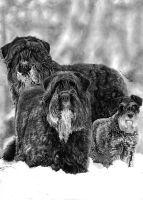 Snow Schnauzers by Yankeestyle94