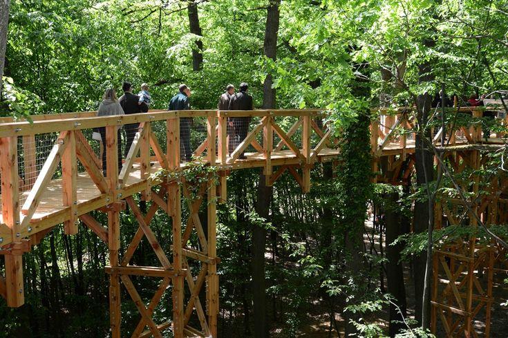 Gyere Somogyba fára mászni: megnyílt a lombkorona-tanösvény! – morzsaFARM