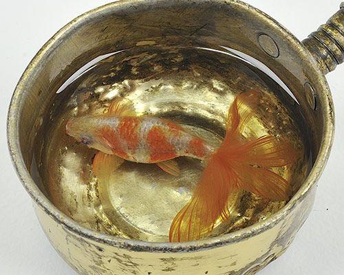 Best Riusuke Fukahori Images On Pinterest D Painting - Incredible 3d goldfish drawings using resin