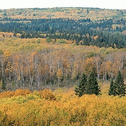 Grey Owl Trails in Manitoba National Park - This gentle trail takes hikers on a 17 km journey through sandy beaches, pine forests, clusters of aspen and balsam trees #Hiking