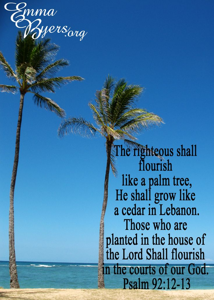 Palms bible quotes quotesgram for Prayer palm plant