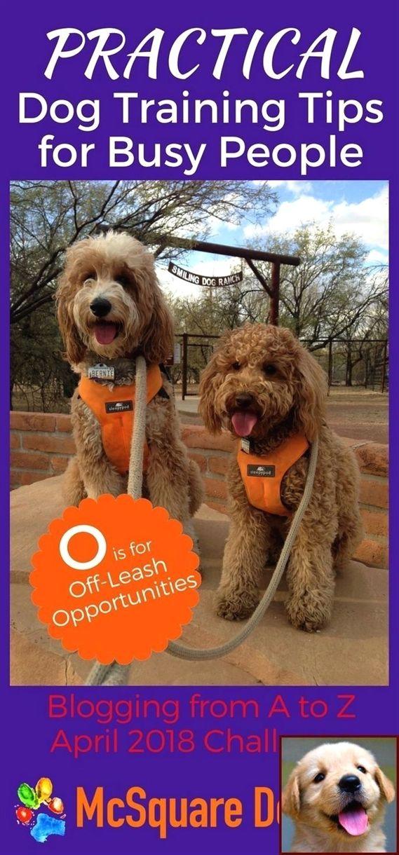 Electric Remote Dog Training Shock Collar Dog Training Recall