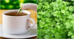 Chá de salsinha para emagrecer até 5 kg em 1 mes