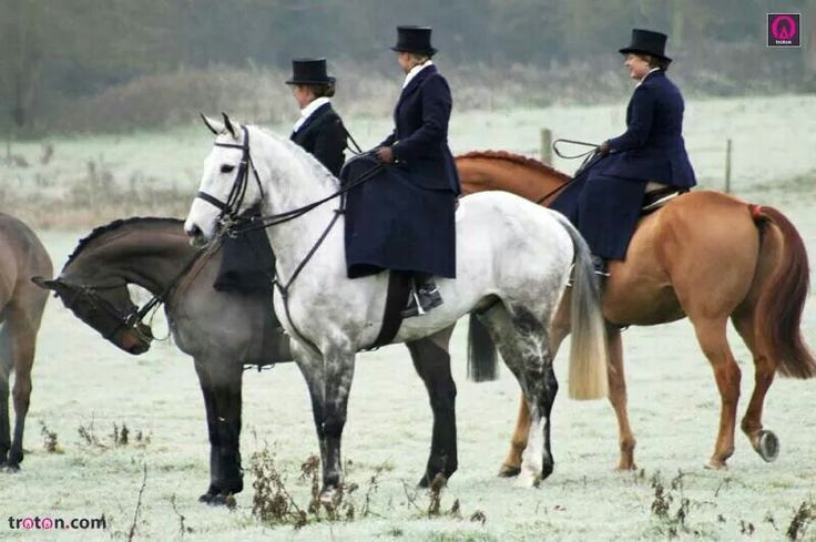 ♥ Horse Stuff ♥  Love the elegance of side saddle