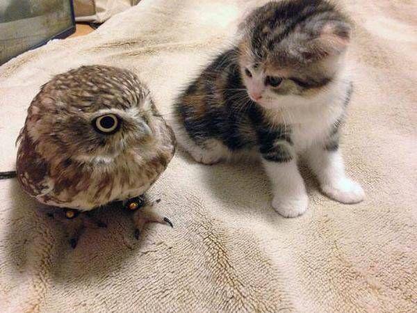 猫とフクロウ1                                                                                                                                                                                 もっと見る