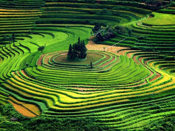 My heart gets filled with joy when I see rice terraces. It's such eye candy. Seen them from Myanmar (Burma) to Indonesia; these are in Vietnam. Photograph by Tho Le Duc ('My Shot')