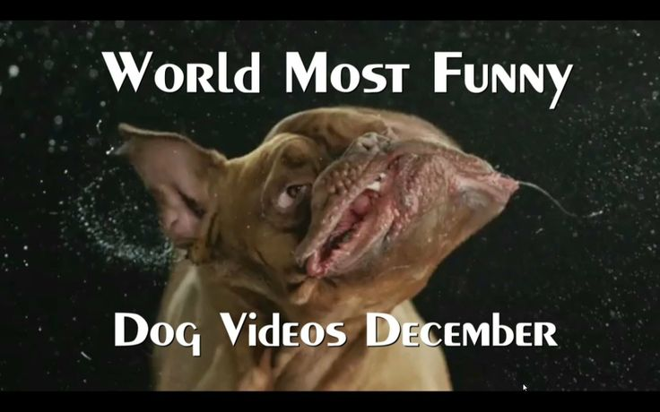 The World's Most Funny Dog Videos December 2013