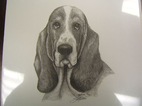 1000+ images about Basset Hounds on Pinterest