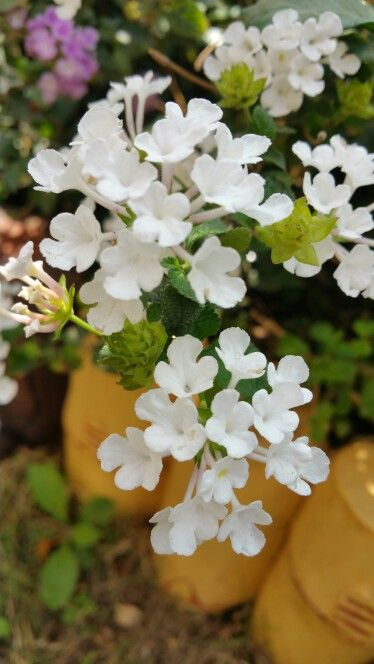 Rehaish#garden#tiny tots