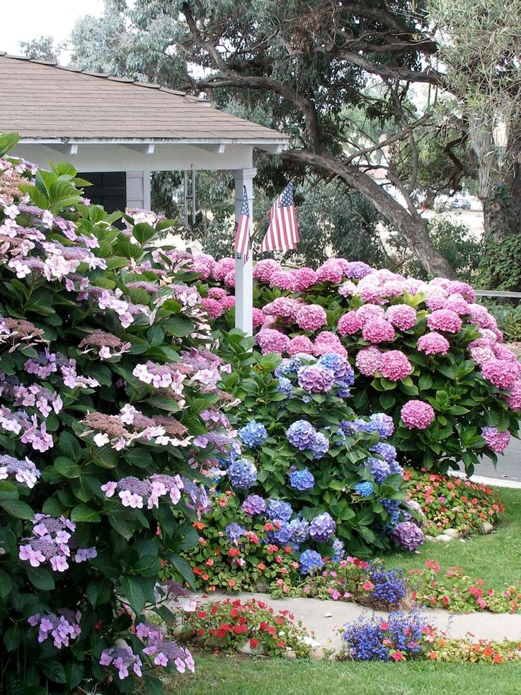 Hydrangea, lacecap and bigleaf. Shrubs for Areas With High Shade | Landscaping Ideas and Hardscape Design | HGTV