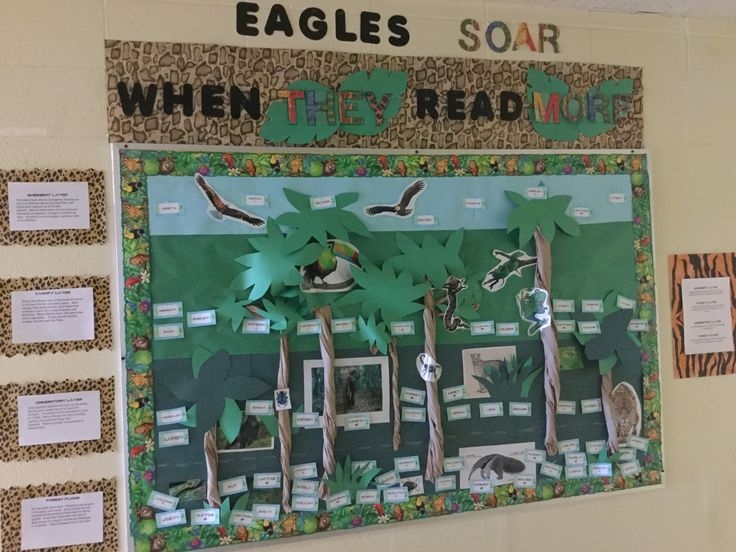 Jungle themed bulletin board...I made this to keep track of students' progress towards their Reading Counts goals...They move up through the layers of the rainforest and when they have met their goal they get to soar with the eagles (our mascot). On the left, I included info about the different levels, and on the right, I have a key to explain how the levels coordinate to their reading progress.