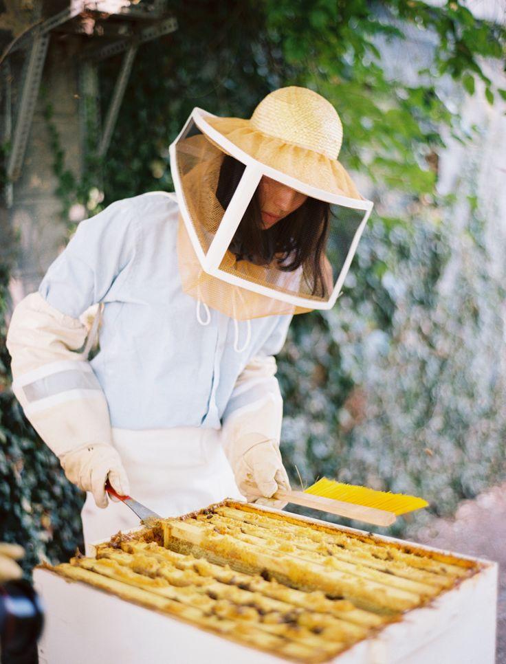 Beekeeping essay hiveandhoneyapiary com