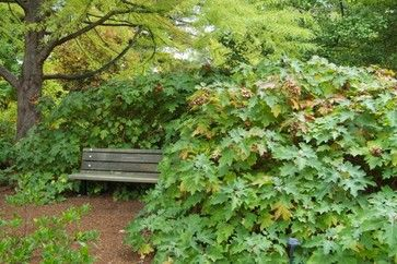 A great place to relax on a bench nestled next to a hydrangea.