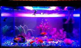 AQUARIUM SUPPLIES, ACCESSORIES AND EQUIPMENT: Setting Up Lighting For Your Aquarium