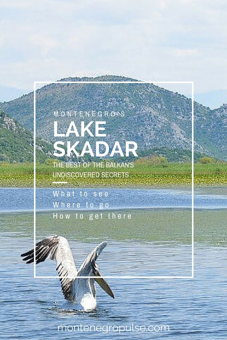 Lake Skadar is the biggest secret in the Balkans. It's home to more than half of Europe's bird species, including the endangered Dalmatian Pelican and awesome freshwater beaches. Lake Skadar is a must see on your trip to Montenegro.