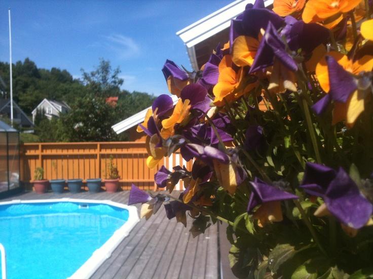 Our garden - på terrassen