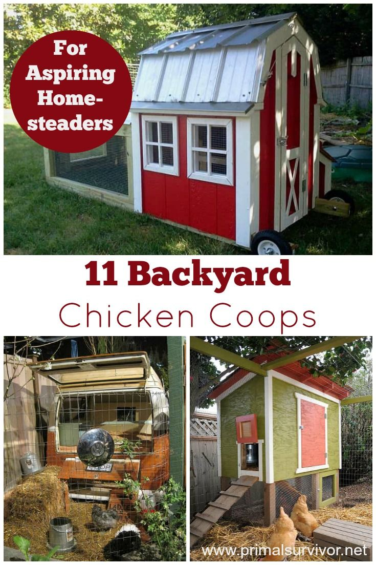 1910 best chickens images on pinterest backyard chickens