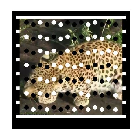 SHAYAMANZI Leopards Zoy and his girlfriends (Part 1 of 3) - January 2014 Wildland Article