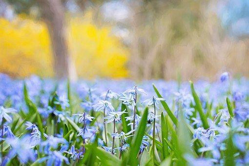 Fleurs De Printemps, Pays, Nature