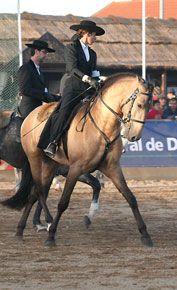 Traje português de equitação, Golegã, Portugal.
