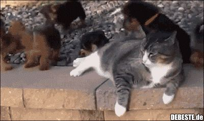 MANTENHA A CALMA – Nível 100. | Fotos engraçadas, provérbios, piadas, muito engraçadas   – Katzen