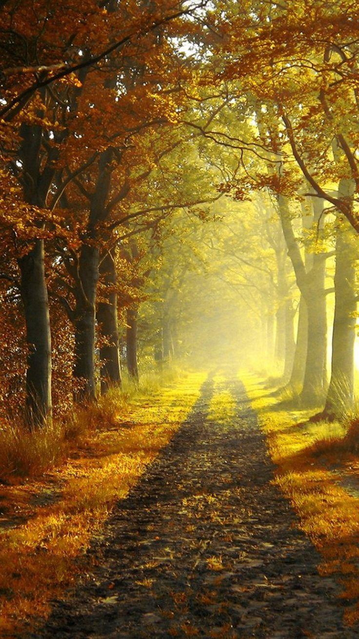 Autumn morning iphone 6 wallpapers iphone wallpapers pinterest autumn morning paths and - Beautiful country iphone backgrounds ...