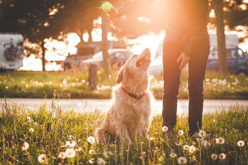 Aunque el parque es un lugar ideal al que llevar a nuestro perro, debemos no cometer ciertos errores que hagan de este momento uno de relax.