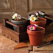 Inspiring Dessert Ideas from Churchill's New Spring '15 Plant Pot Range...Chocolate Mousse With Edible Flowers Presented On An Art de Cuisine Wooden Crate.