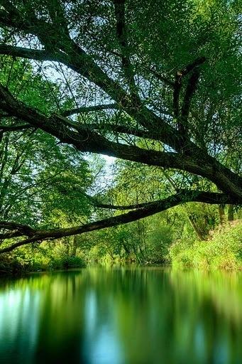 Take a walk around the pond! #fraservalley