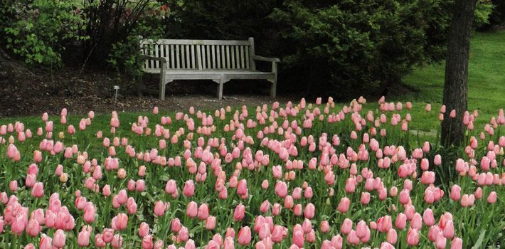 One of the wonderful tulip displays at Fellows Riverside Garden, Mill Creek MetroPark, Youngstown, Ohio