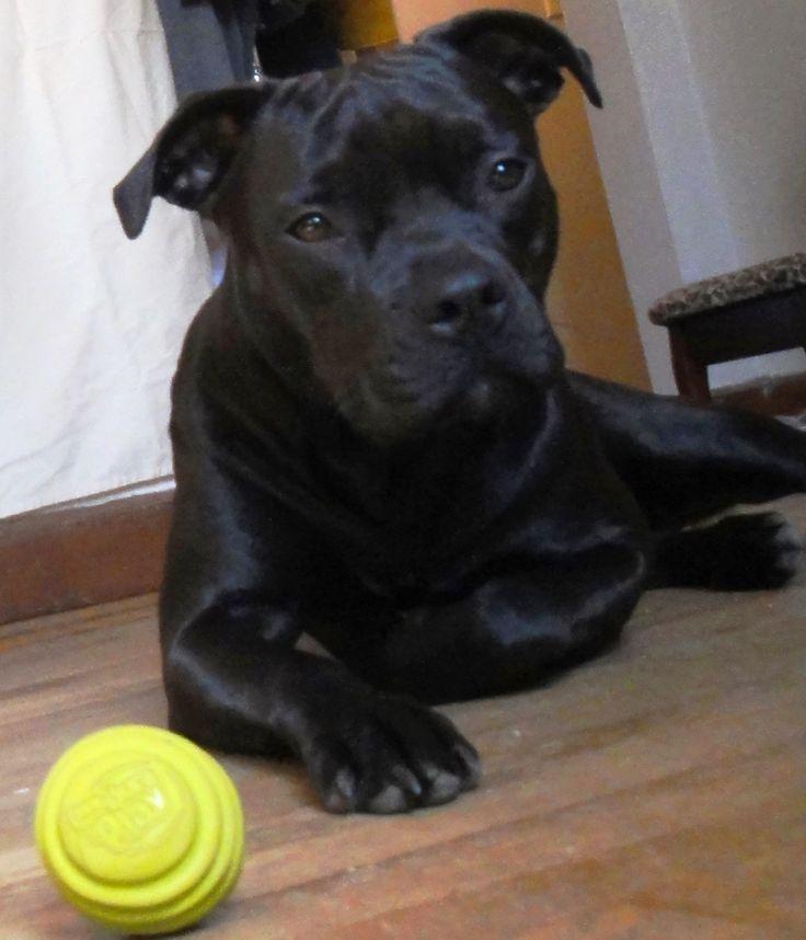Best Indestructible Dog Toy Mastiff