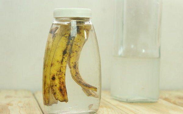 Geef planten een boost met bananenschillen