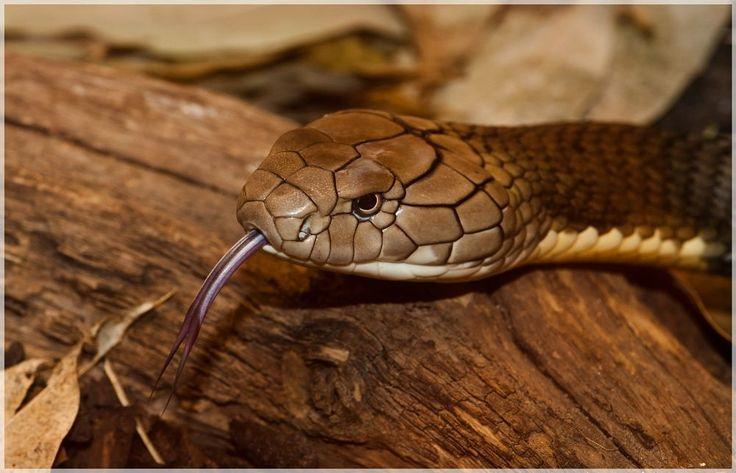Snake  by peter.h.hansen1