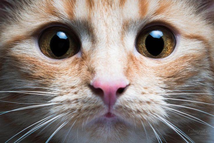 pisică, mustăți, privire,p2