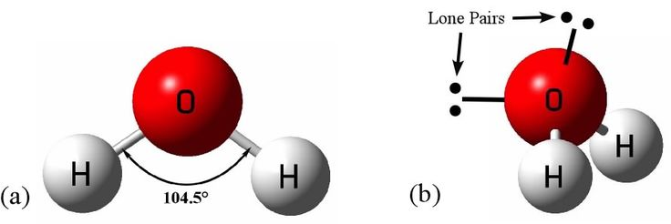 "Water molecules are polar in nature. Water molecules are basically, H_2O molecules, which have bent shapes. Also, O atom is electronegative than H atom. So, the entire electron densities of the two hydrogen atoms get attracted towards the oxygen atom. Thus a polarity develops in each O-H bonds, and thus, the water molecules are polar in nature and act like ""little magnets"". Bent shape of water Polar water molecule"