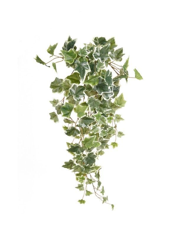 Artificial Trailing Ivy With A Variegated Leaf 3 Sizes Available Very True To Life Fake Ivy Artificial Plants Artificial Plant Wall Artificial Plants Outdoor