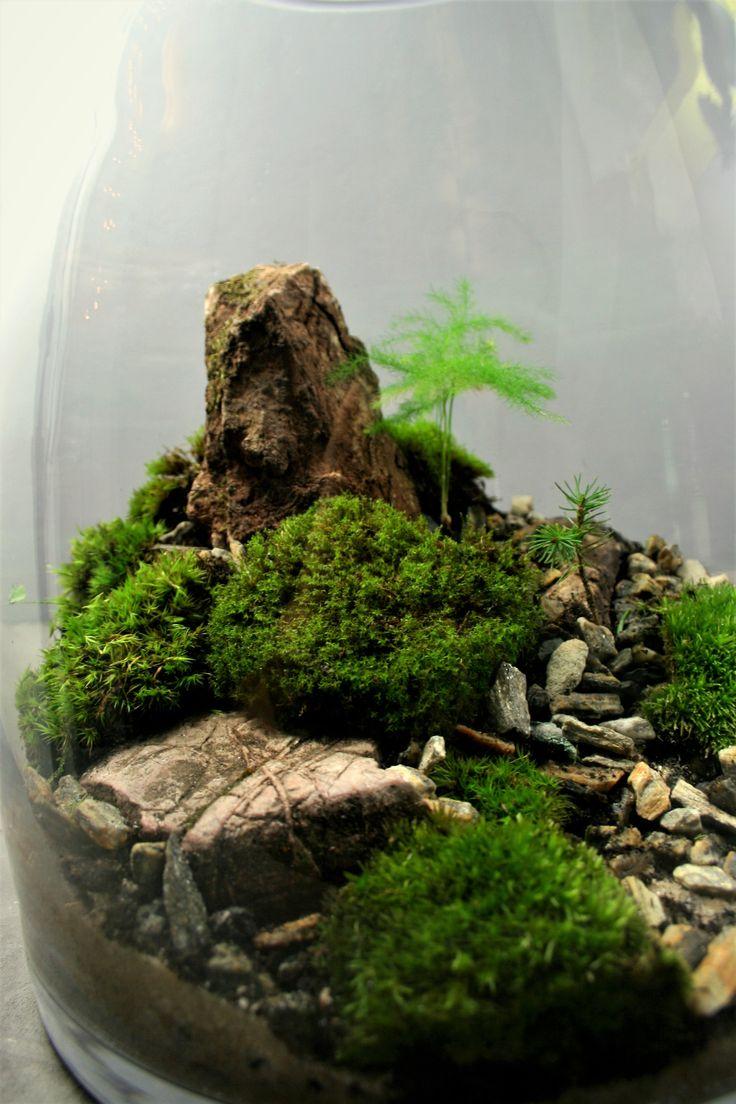 best plants terrarium images on pinterest terrarium ideas