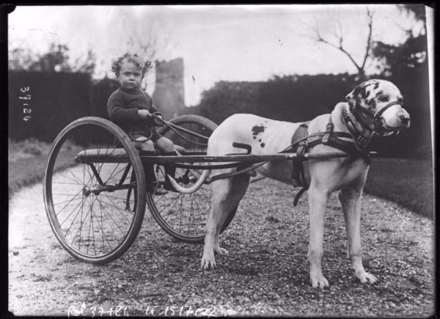 Vintage Pictures of Mr Wingfield's Tame Animals from the Early 20th Century