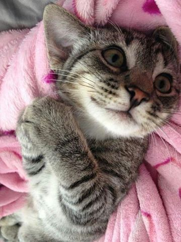 """""""Tell me again about da day you 'dopted me cause you knew I was yur special kitty..."""""""